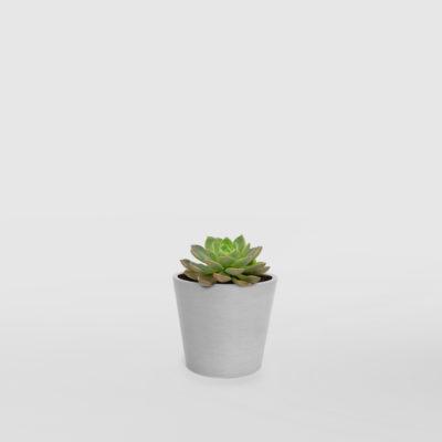 Succulent Sunny in Mini EcoPot Whitestone