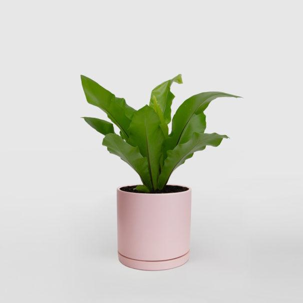 Bird's Nest Ceramic Pot Pink