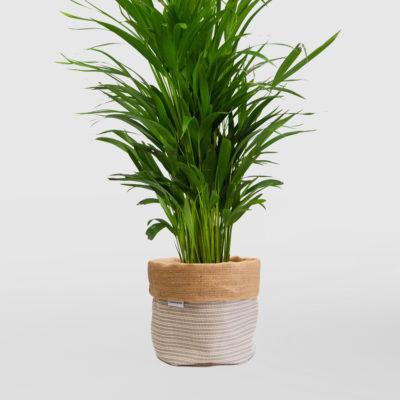 Golden Cane Palm Planter Bag Medium Natural Basketweave