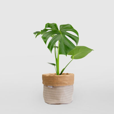 Monstera Deliciosa Planter Bag Medium Natural Basketweave
