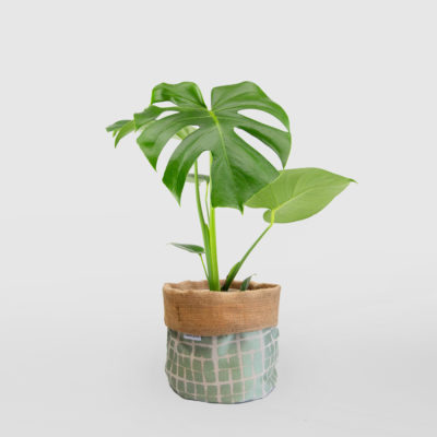 Monstera Deliciosa Planter Bag Medium Sage Green