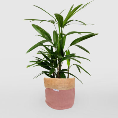 Lady Palm Planter Bag Pink Medium