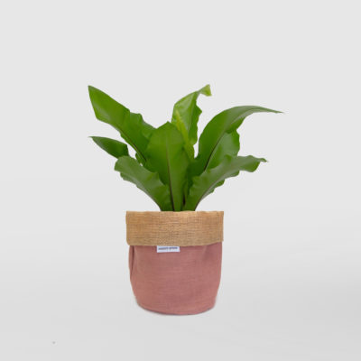Birds Nest Fern Planter Bag Pink Blush Small