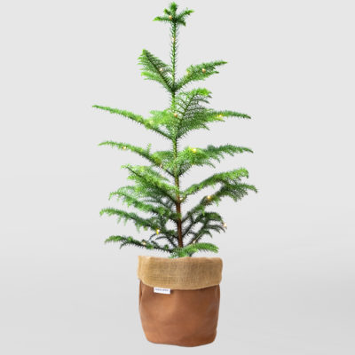 Christmas Tree Planter Bag Brown Medium