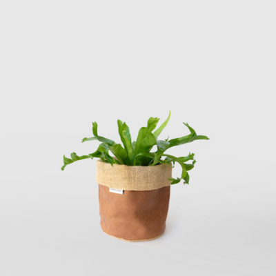 Birds Nest Fern Crissie Planter Bag Brown Small