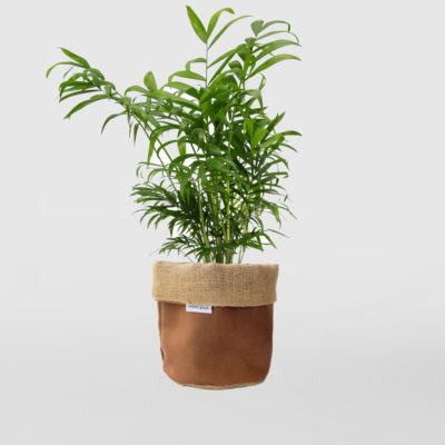 Parlour Palm Planter Bag Brown Leather Small