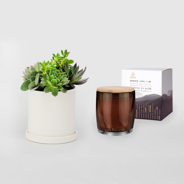 Succulent Bowl Gift Set