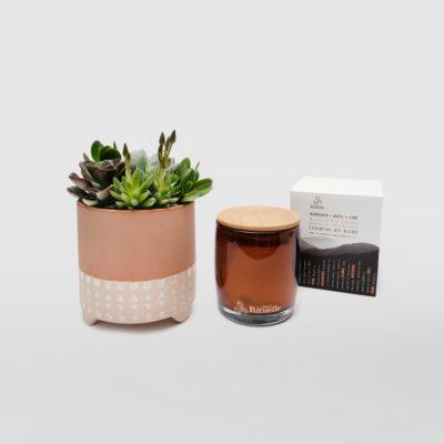 Succulent Bowl Living Gift Set Candle
