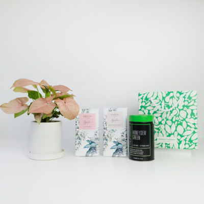 Syngonium Living Gift Set