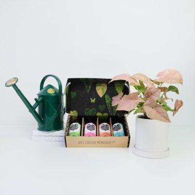 Syngonium Living Gift Set Nurture