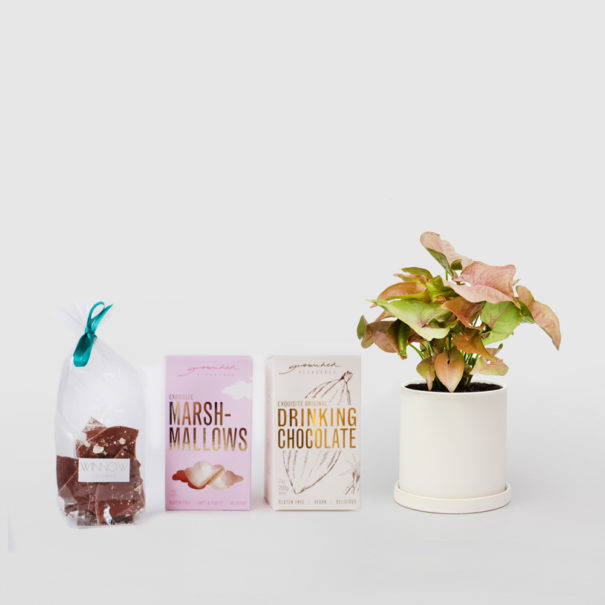Syngonium Chocolate Gift Set