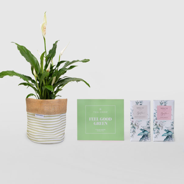 Peace Lily Feel Good Living Gift Set SS