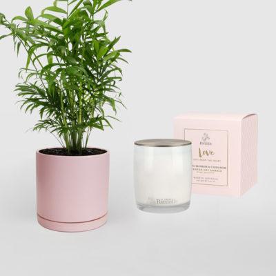 Parlour Palm - Pure Love Living Gift Set