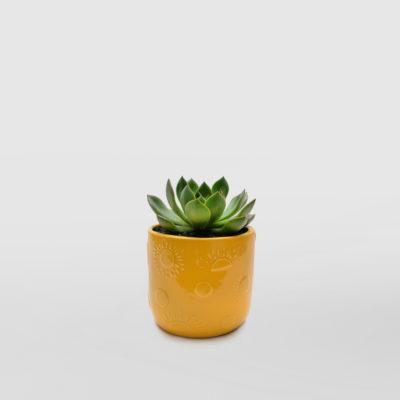 Succulent Happy Mini Ceramic Pot